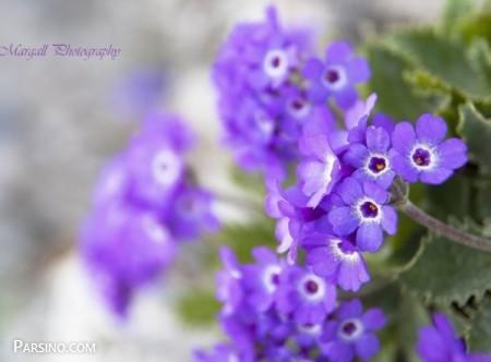 عکس پروفایل گل , عکس پروفایل گل زیبا , عکس پروفایل گل برای تلگرام